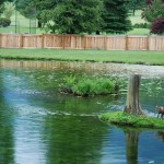 cultus-cottages-pond-3