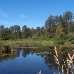 cheam-lake-wetlands-1